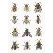 Postkarte Wildbienen